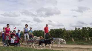 Cani-rando vignes