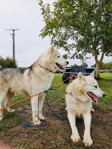 Lancement Saison Doggy-Kart